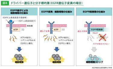 【解説】肺がんの経口抗がん剤治療と副作用対策(EGFR Ver.)